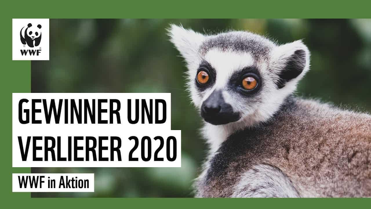 Gewinner und Verlierer 2020 | WWF Deutschland